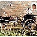 Avesnois - en route pour la traite.***