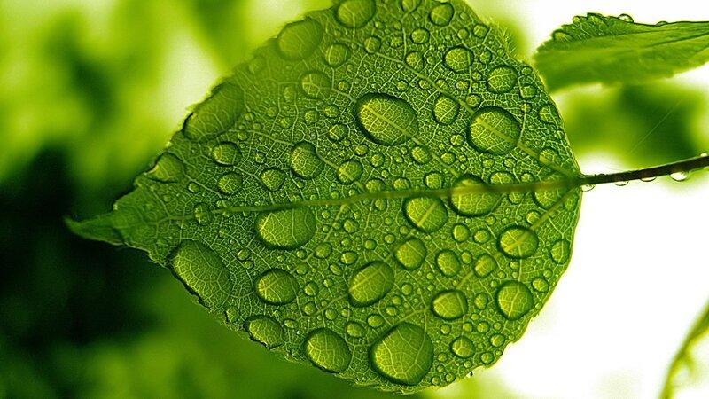 5897-eau-et-chlorophylle-WallFizz