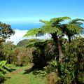 Basse Vallée Rainforest