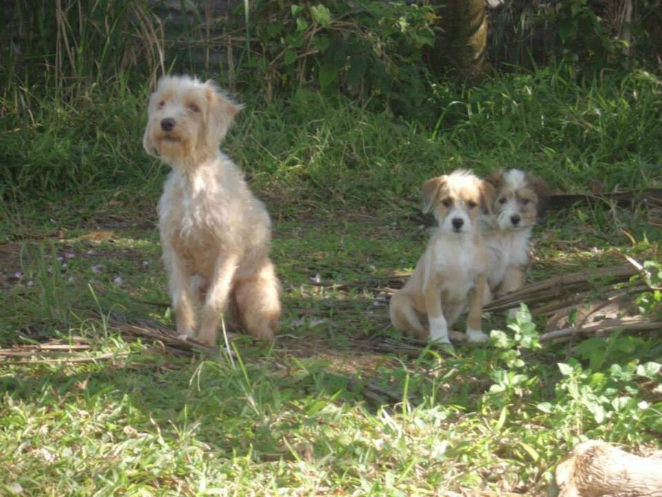Miss abricot 1 Vaval et Sabba largués dans la forêt tropicale