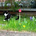 Lytchie s'éclate en son jardin