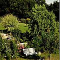 Windows-Live-Writer/jardin_D005/DSCF3979_thumb