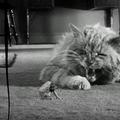 L'homme qui rétrécit (the incredible shrinking man) de jack arnold - 1957