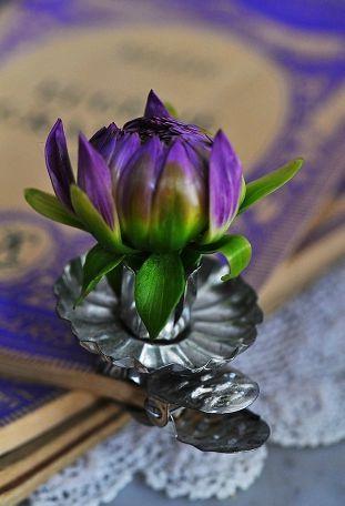 fleur0