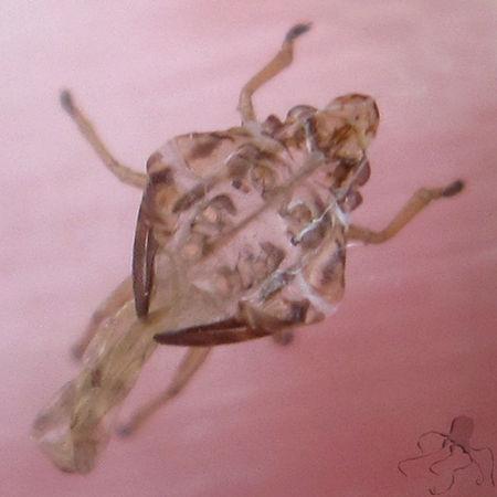 mue_d_insecte