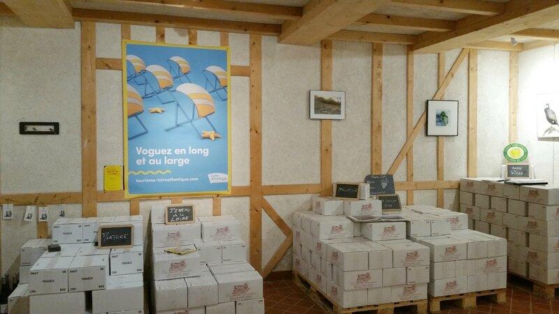 Loire-atlantique-tourisme-vignoble-domaine-11