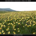 Les fleurs sauvages sur le plateau ardéchois