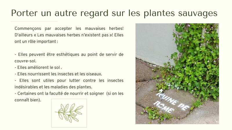 Jardin naturel : plantes sauvages