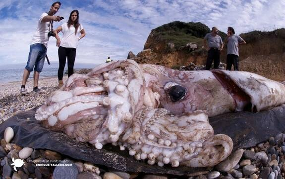giant-squid-enrique-talledo