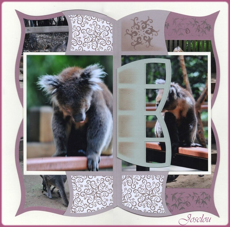 Koala Park 6