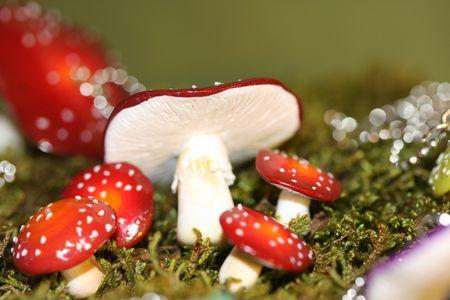 champignons + calissons 117