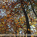 L'automne, son symbolisme et son enseignement sur le plan ésotérique