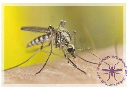 naturo moustiques
