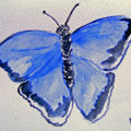AQUARELLE PAPILLON - BUTTERFLY IN WATERCOLOUR