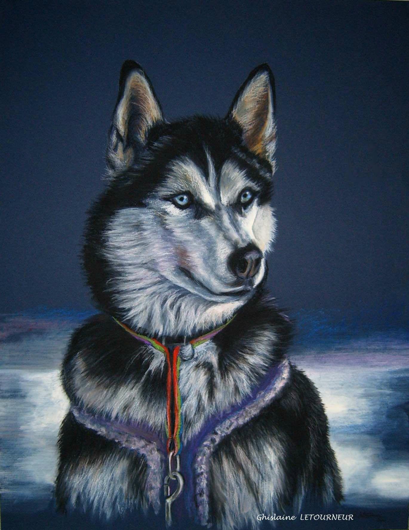 Dessin de husky sib rien chien de traineau peinture - Coloriage chien de traineau ...