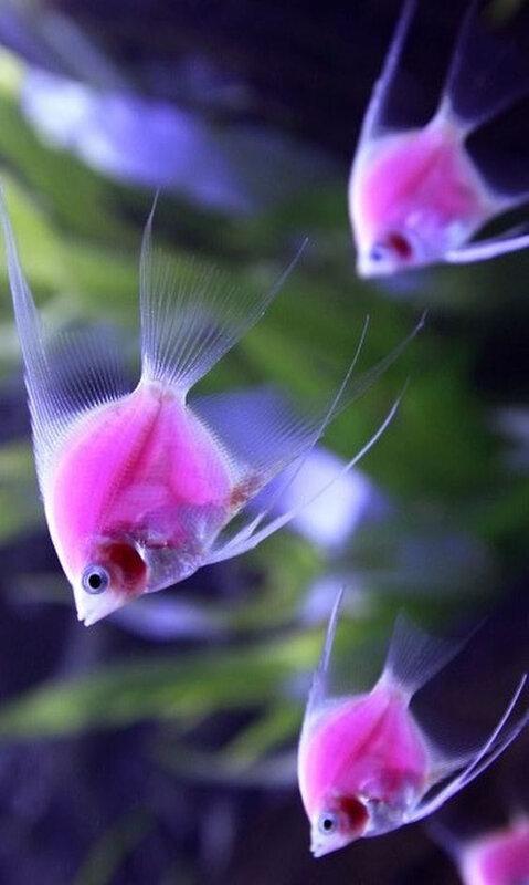 poissons_25