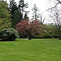 Entre cerisiers et jacinthes
