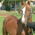 chevaux 019