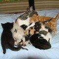 2008 04 05 Papillon et tous les petits chaton d'elle et de Blanco