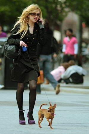 Promenade_chien_f_aller