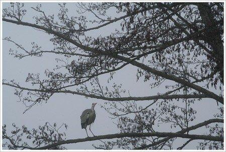 heron_pose_arbre_brouillard_301207