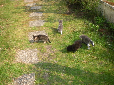 chats_et_nid_017