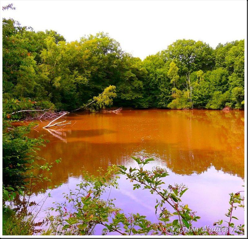 Un air d'Amazonie (7)
