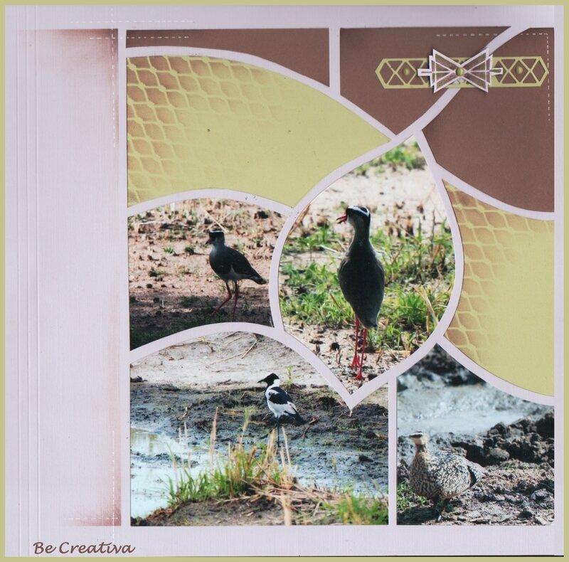 OiseauxTarangireDoublePageCote Gauche