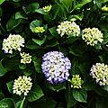 1-Fleurs de Léon 190517