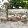 cocos (2)