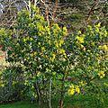 Mimosa 19001168