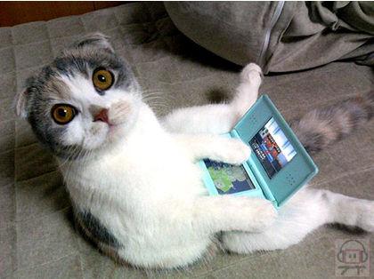 110221image1nintendo_ds_lite_cat