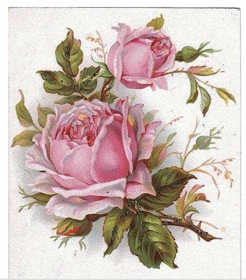 Rose-Postcard--5 (1)