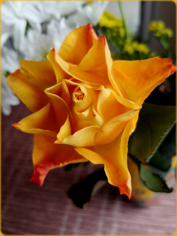 rosejaune2