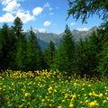 les fleurs de la forêt
