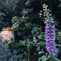 jardin intimiste b