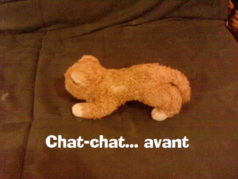 Chat-chat d'aymeric