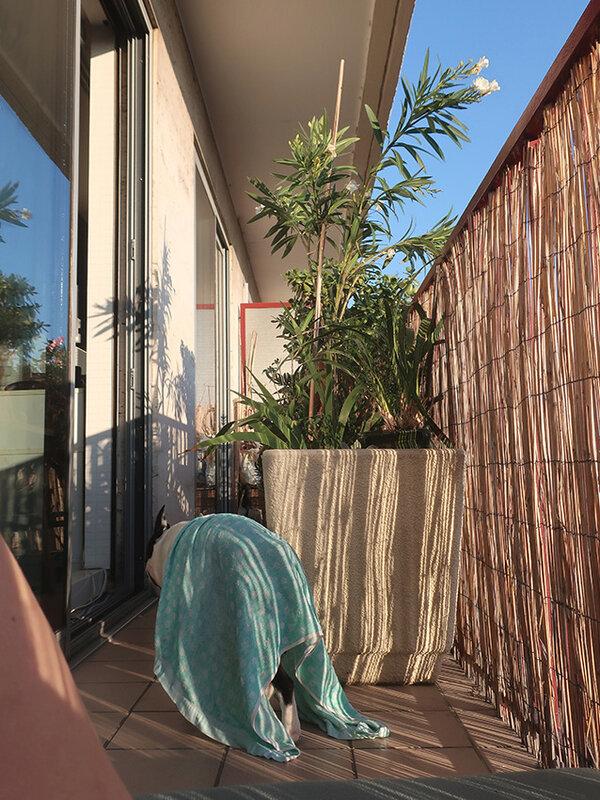 balcon g