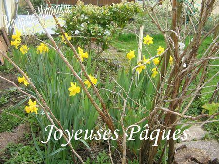 Coucous et hortensias 24 mars 2013 004