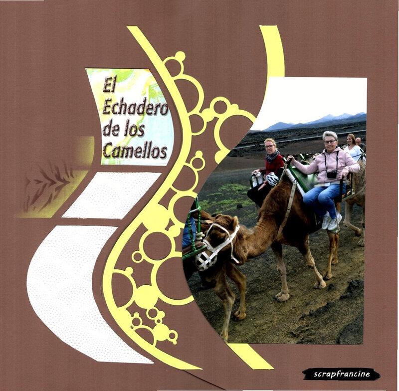 chameaux 1
