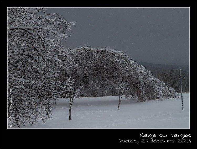 IMG_1243-naturelimages.com