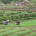 Yangshuo et Le Fleuve Li