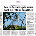 Article dna: les balbuzards pêcherus sont de retour en alsace