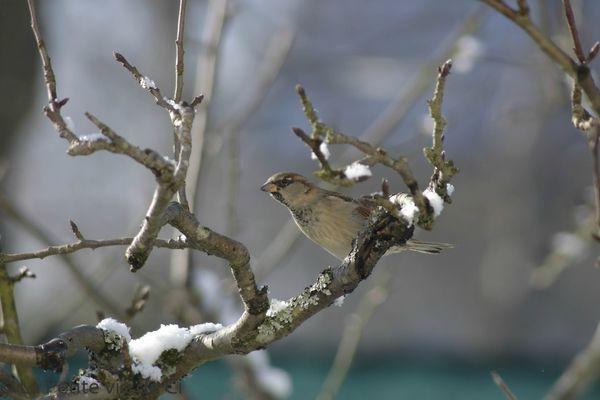la_petite_vie_de_ci birds (5)