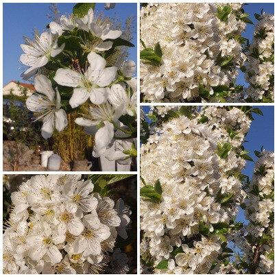 Fleurs du jardin (17)