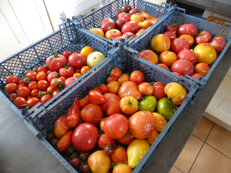 19-tomates (3)