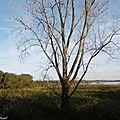 Lever de soleil et Marais d'Orx 161117