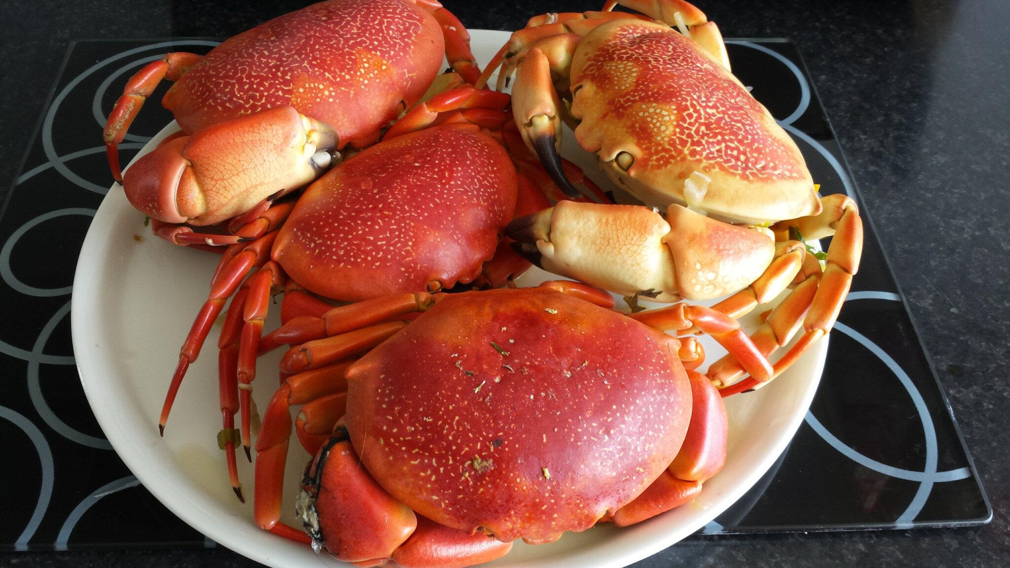 Crabes @Janemexique 20160513_122225