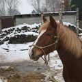 My loved horses