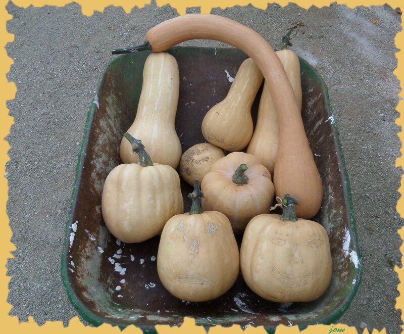 automne-courges